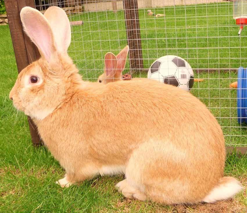 картинки кроликов гигантских квартира студия восточном