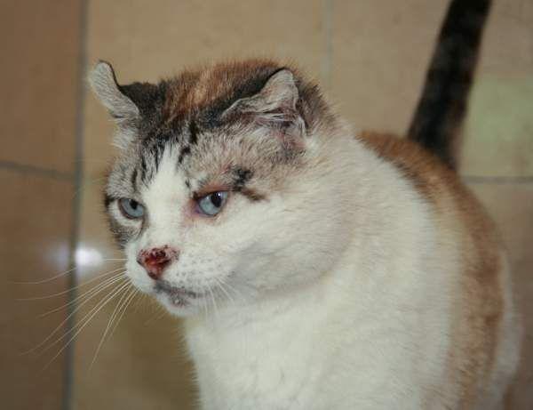 PANDORA - Gato adoptado - AsoKa el Grande
