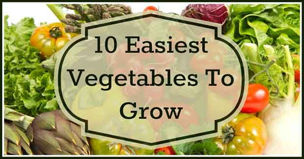 10 Easiest Vegetables To Grow At Home Easy Vegetables To 400 x 300