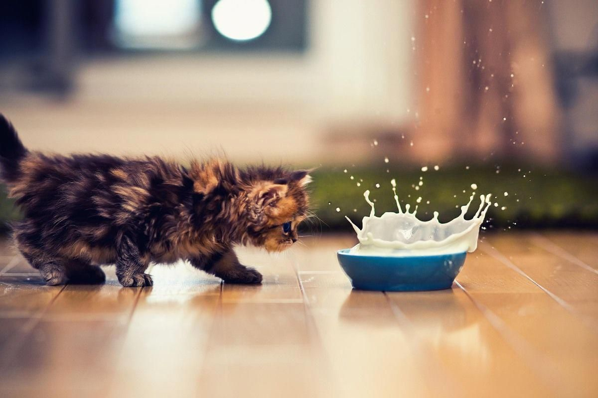 Daisy The Kitten Might Be The World S Cutest Cat Cutestcatsandkittensever Kittens Cutest Cute Little Kittens Cute Cats Photos