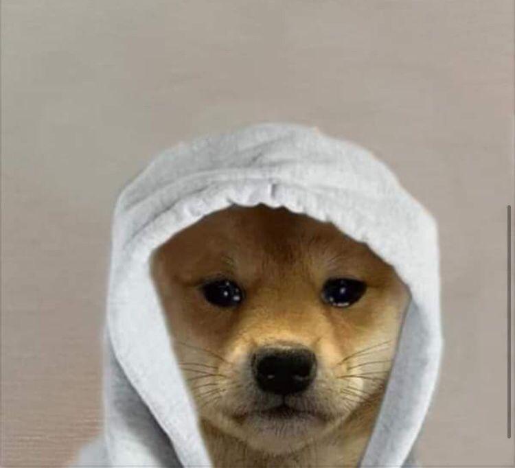 Pin By Joasia Jakas On Super Slodkie Cat Profile Dog Icon Dog Memes