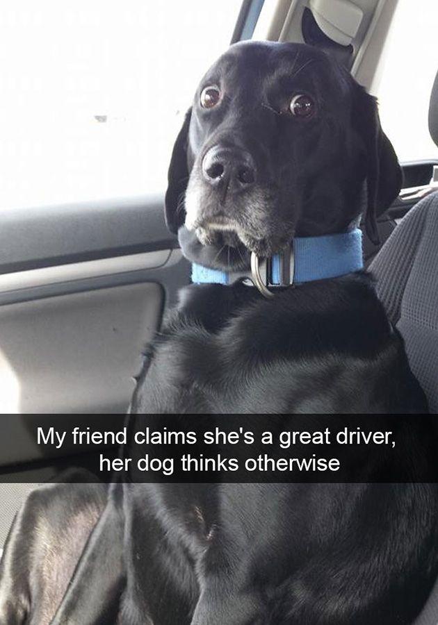 Best Funny Dogs  funny-dog-snapchats 1