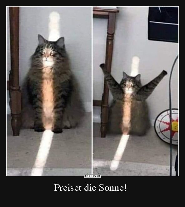 Preiset die Sonne!..   Lustige Bilder, Sprüche, Witze, echt lustig #cuteanimalhumor