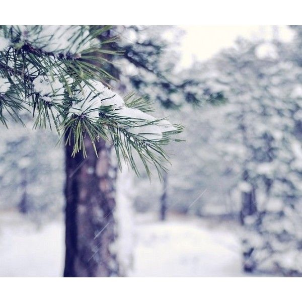 pretty background ❤ liked on Polyvore featuring backgrounds, p-winter e winter
