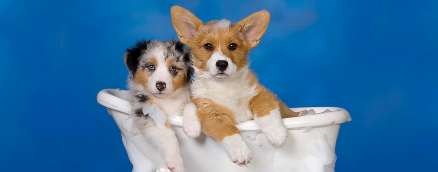 How Often Should I Bathe My Dog? Dogs, Cute animals