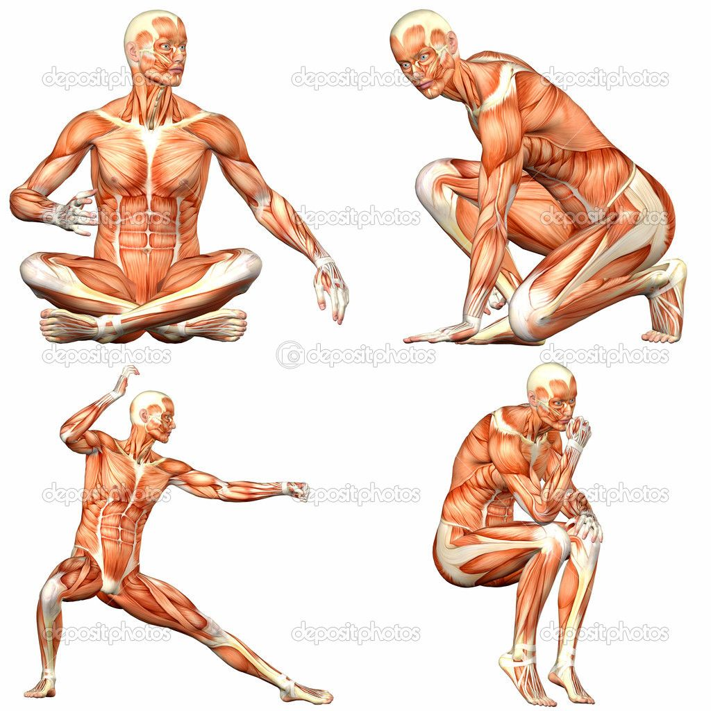 Body Poses | ... body anatomy with different poses isolated on a ...