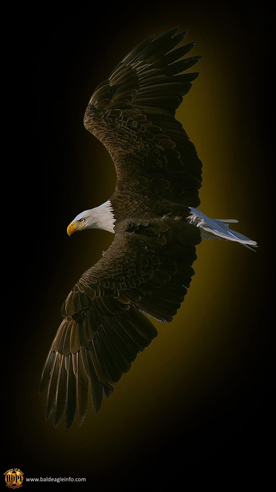 Eagle Wallpaper 4k Iphone Mywallpapers Site In 2020 Eagle Wallpaper Animal Wallpaper Bald Eagle