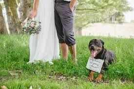 Image result for fotos de novios con mascotas