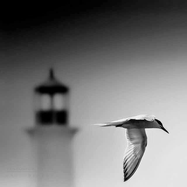 Pin De Meli En Black White Fotografia Minimalista Faro Fotografia