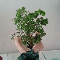 Plantas ornamentais a partir de R$ 15,00