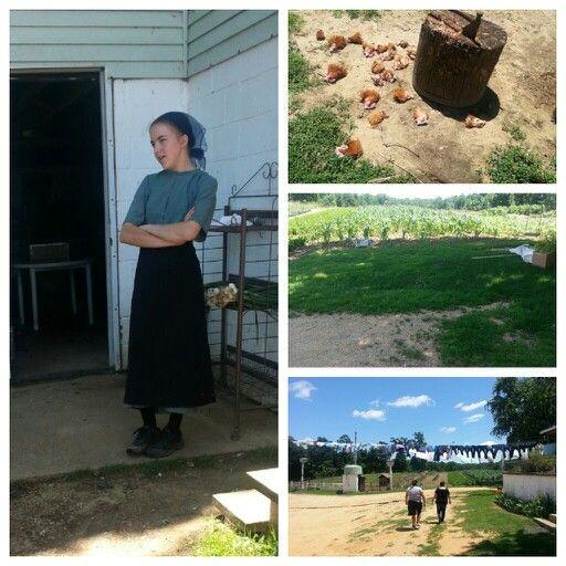 Amish ~ Sarah's Country Kitchen ~