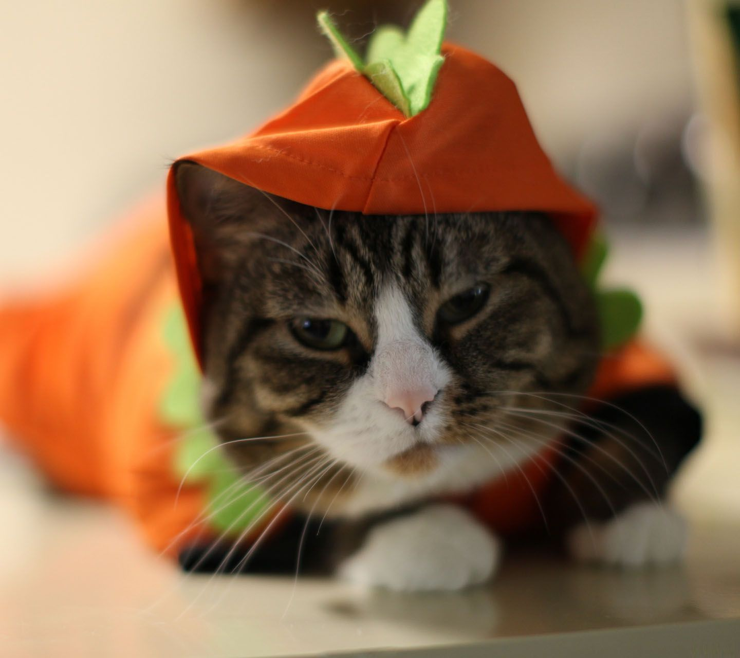 halloween cat pictures Full View and Download halloween