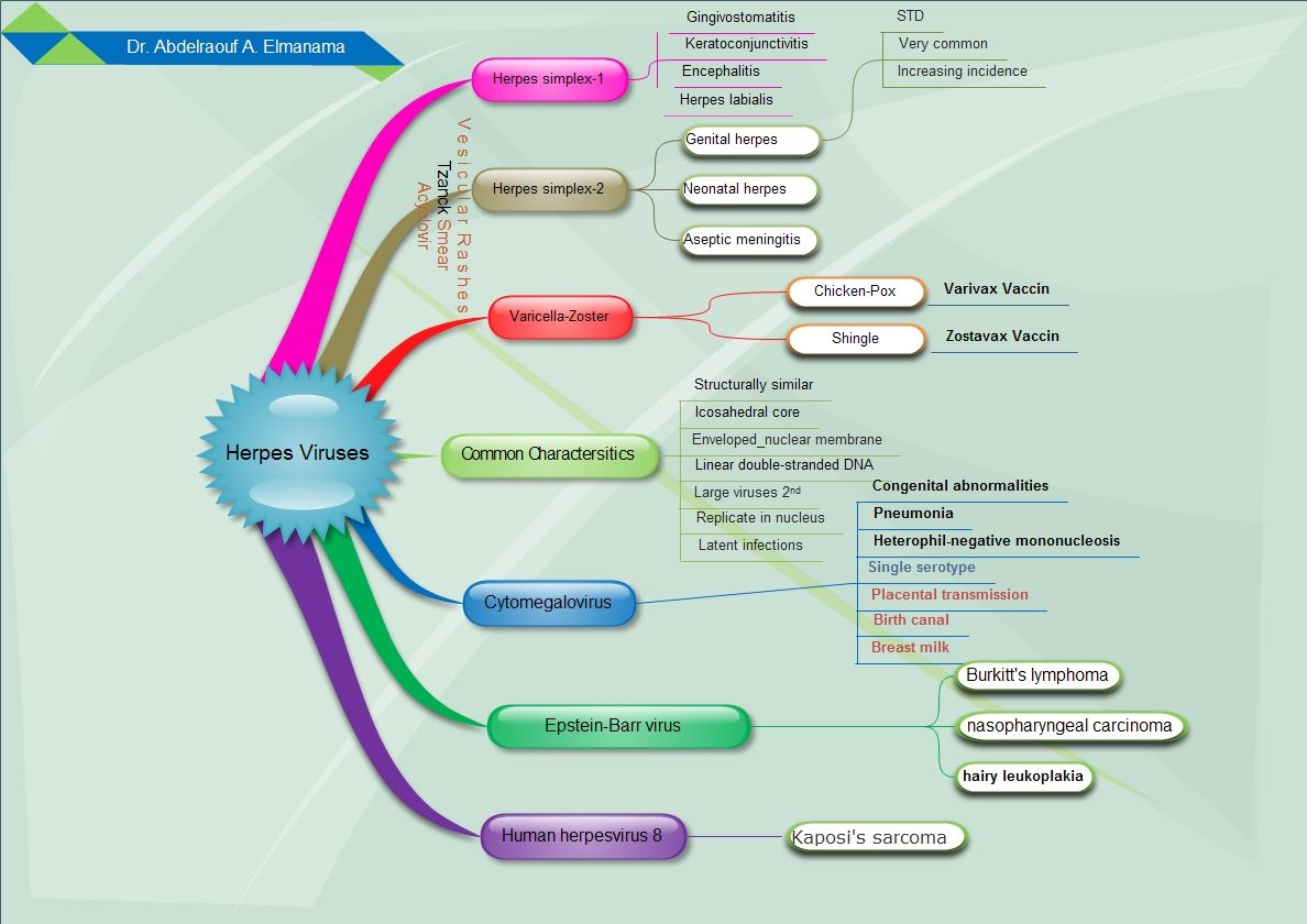 Microbiology Concept Map.Concept Maps Medical Microbiology Microbiology Pinterest