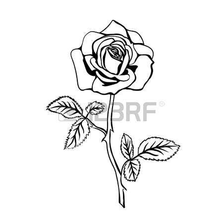 Rose Tattoo Rose Sketch Black Outline On White Background Vector Illustration Rose Sketch Rose Tattoo Hipster Blog