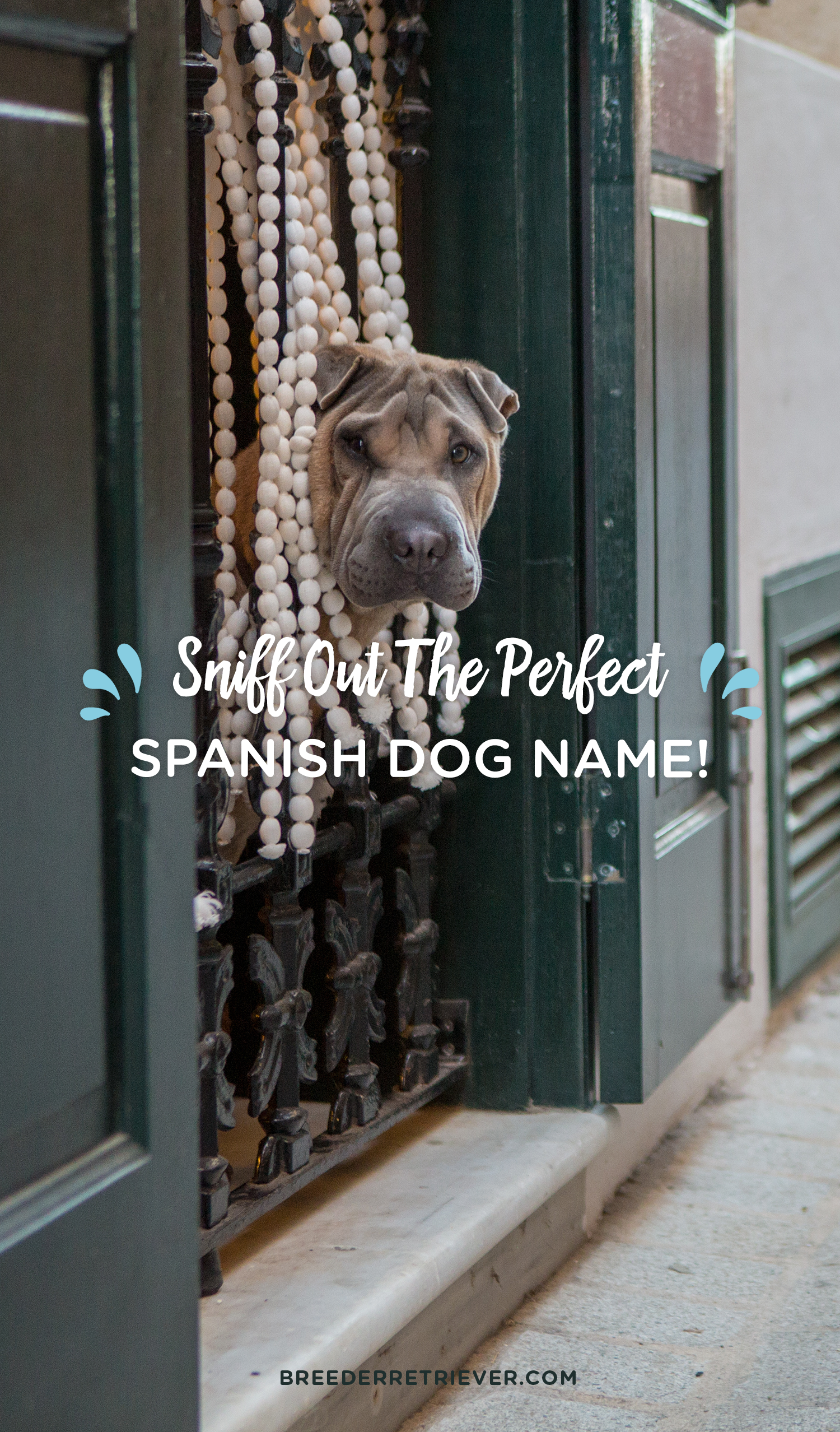 Sniff out the perfect Spanish dog name with this random