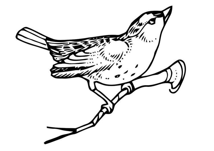 Gratis Kleurplaten Vogels.Kleurplaat Vogel Op Tak Kleurplaten Vogel Borduurwerk En
