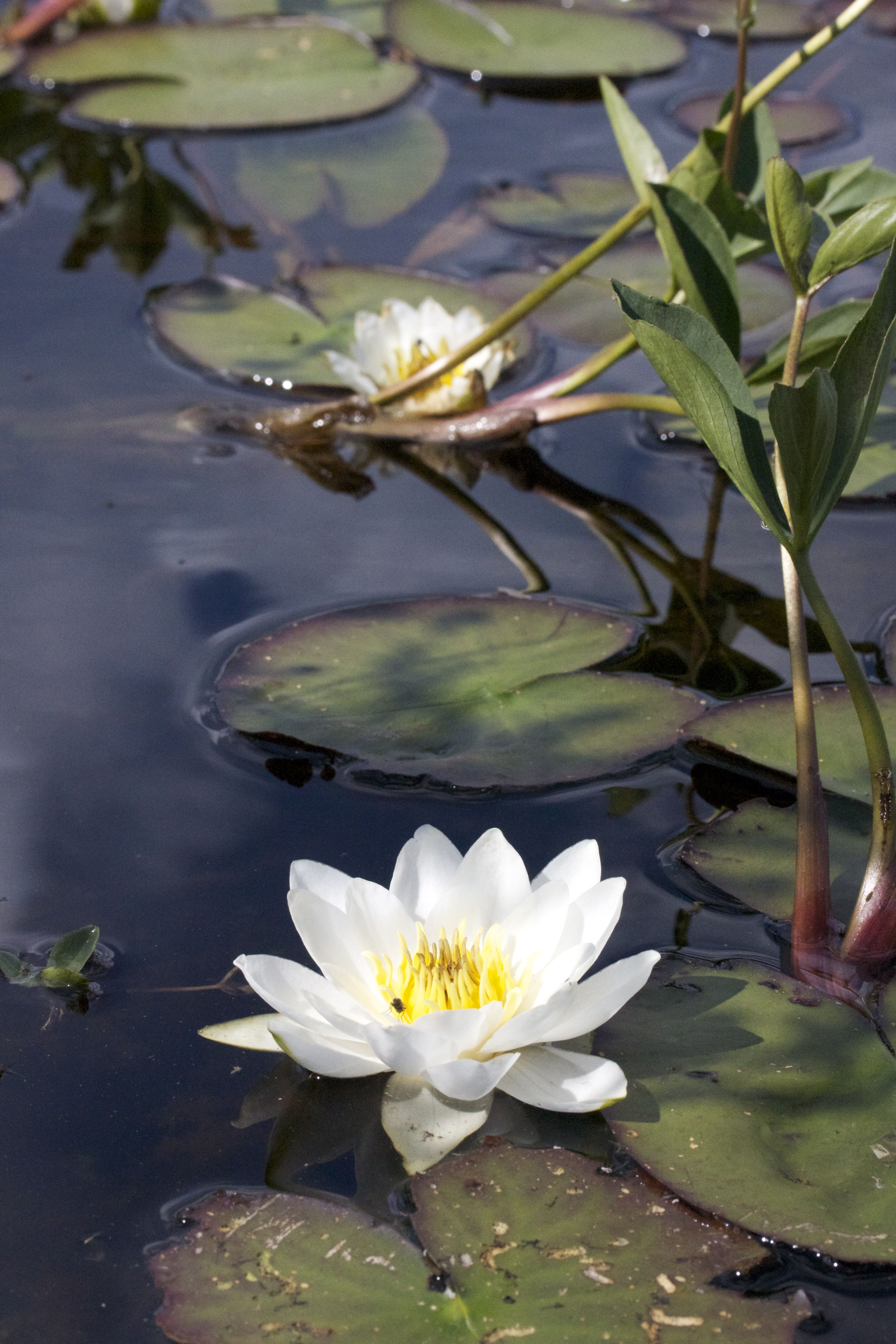 Pin By Mike Dz On Water Lilys Water Lilies Flower Painting Flowers Nature