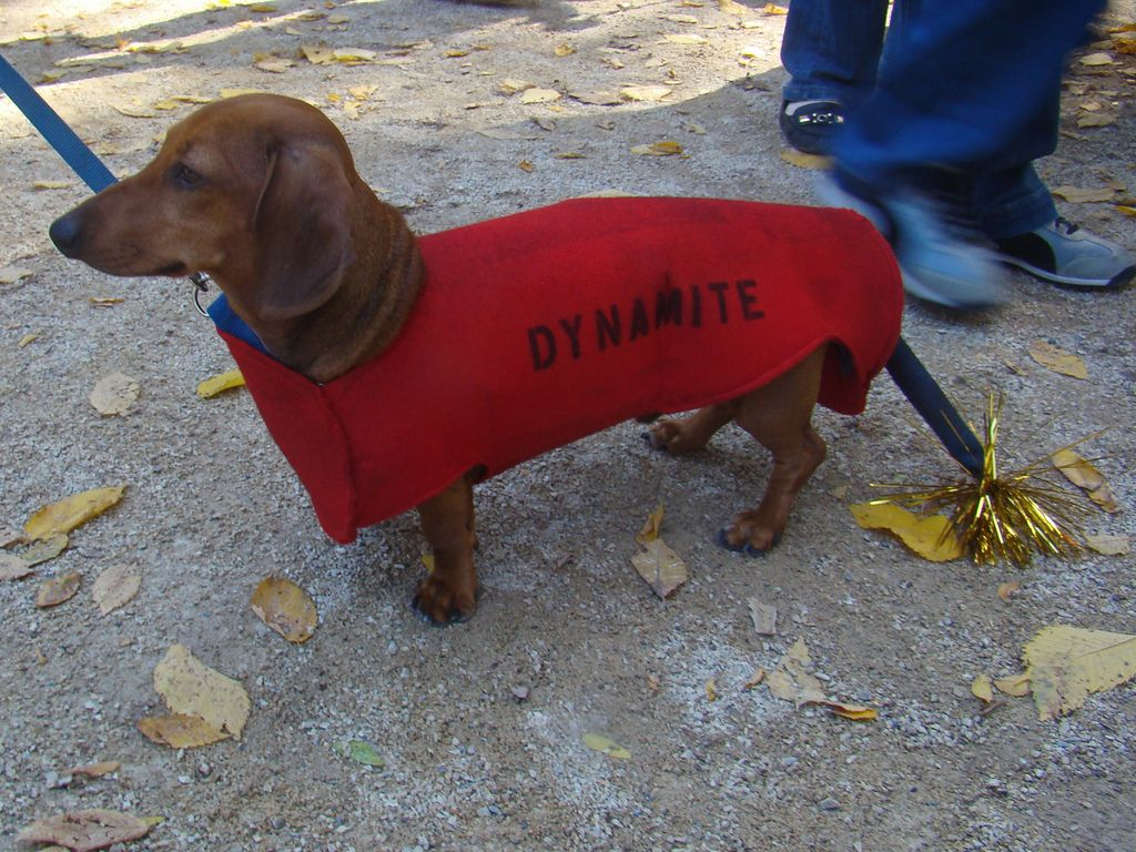 20 dogs in halloween costumes | good dog costumes | pinterest | dog