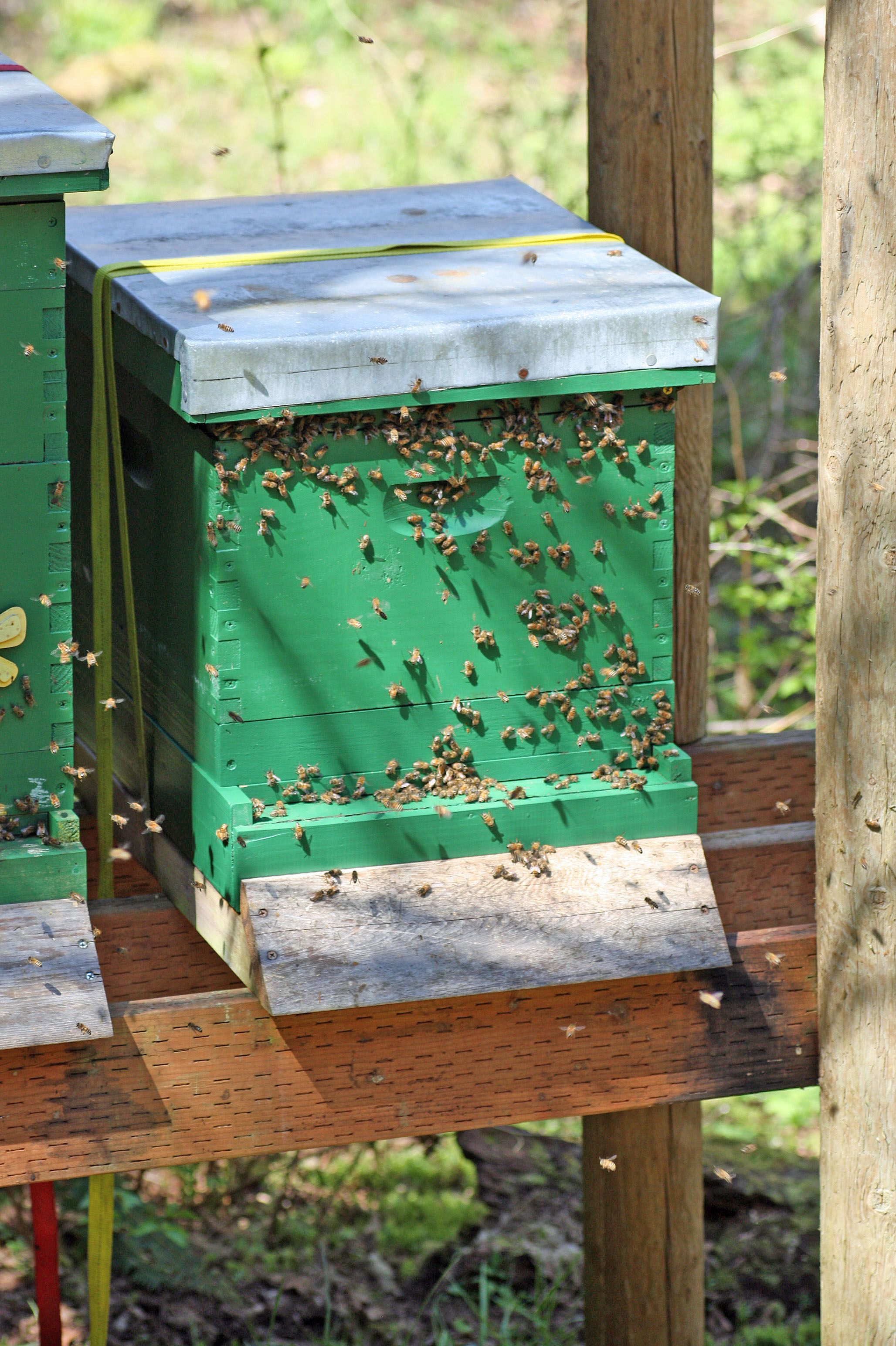 Beau Sun And Shade   Where To Place Bee Hives. Backyard BeekeepingRaising  BeesHoney ...
