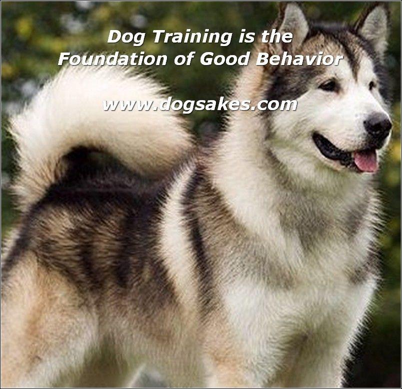 Info's : Interactive Dog Toys - Dog Sakes