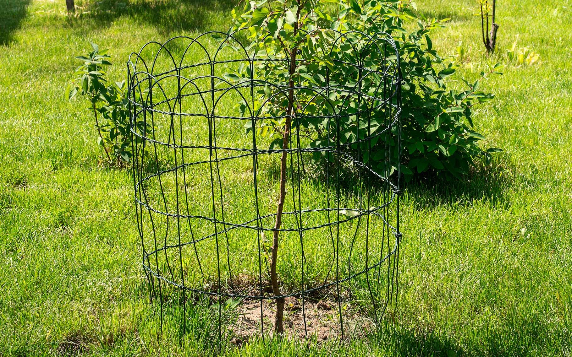 Quand planter un arbre ? | Planter des arbres, Arbre, Jardinage