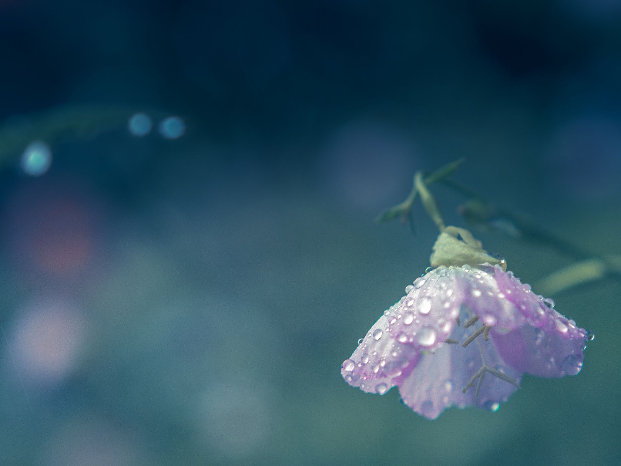 rain+and+rain+by+Miyako+Koumura+on+500px