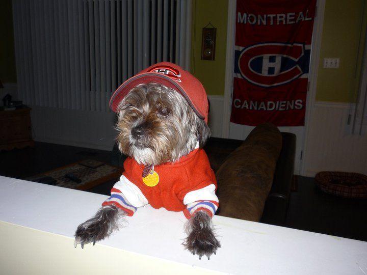 Le chien du Tricolore à la casquette de baseball, soumis par Marc Bougie / Baseball cap Habs dog, submitted by Marc Bougie