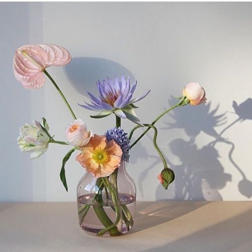 An entry from vilde kaniner flowers flora and plants an entry from vilde kaniner flowers gardenindoor mightylinksfo