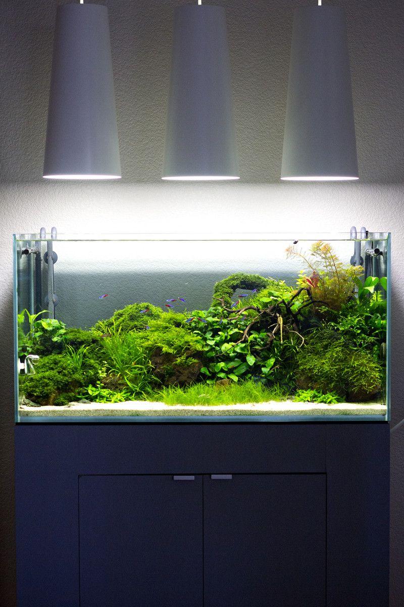 The Ideal Future Of My Tank 48 Gallons Tetras Shrimp Etc Coral Aquarium Aquascape Aquarium