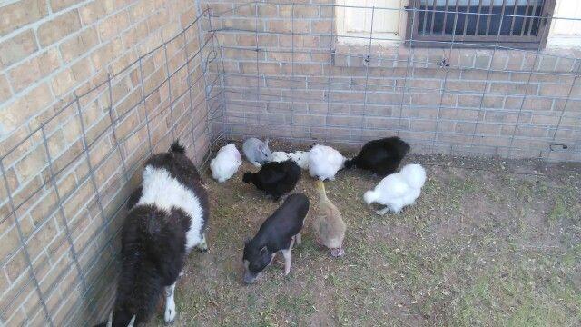 Petting zoo el paso tx