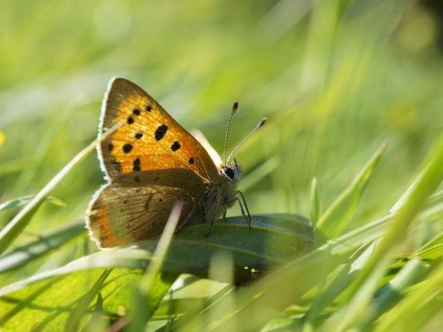 Farm Wilder (FarmWilder) Twitter Butterfly