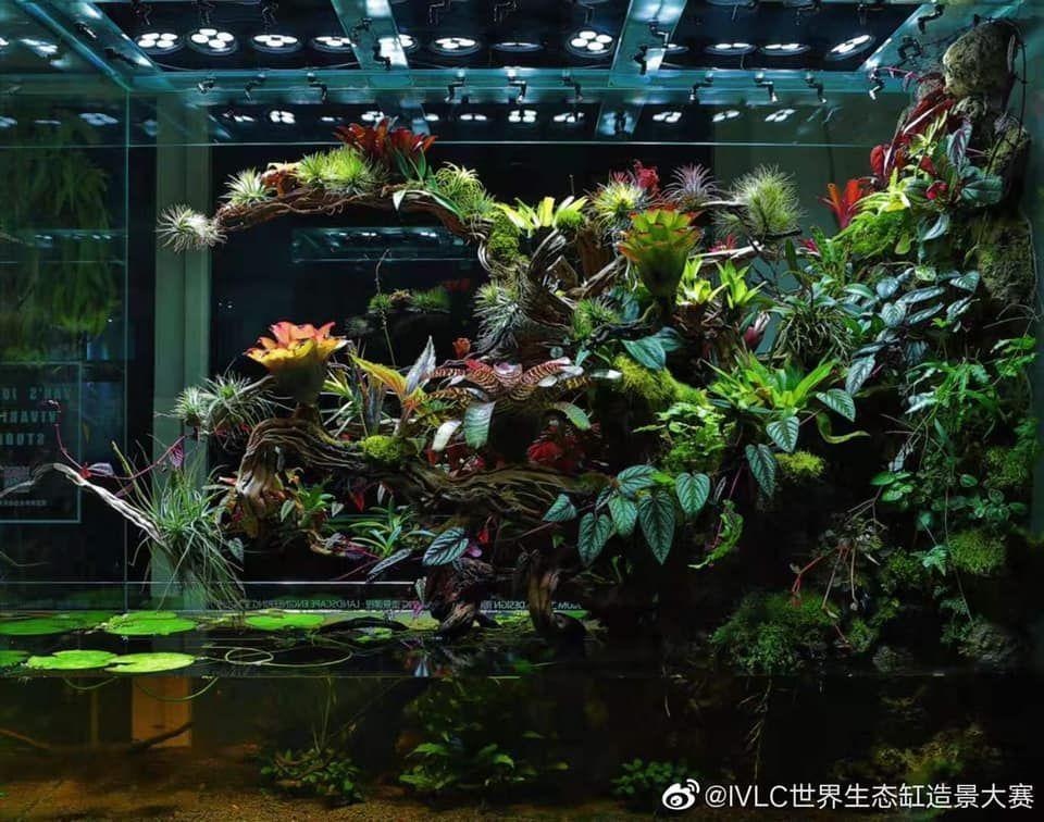 Paludarium M Rainforest Ivlc Terraria Paludarium M Rainforest Ivlc Amphibians Exoticpets Frenchbulldogs Freshwateraquarium ビバリウム テラリウム アクアリウム