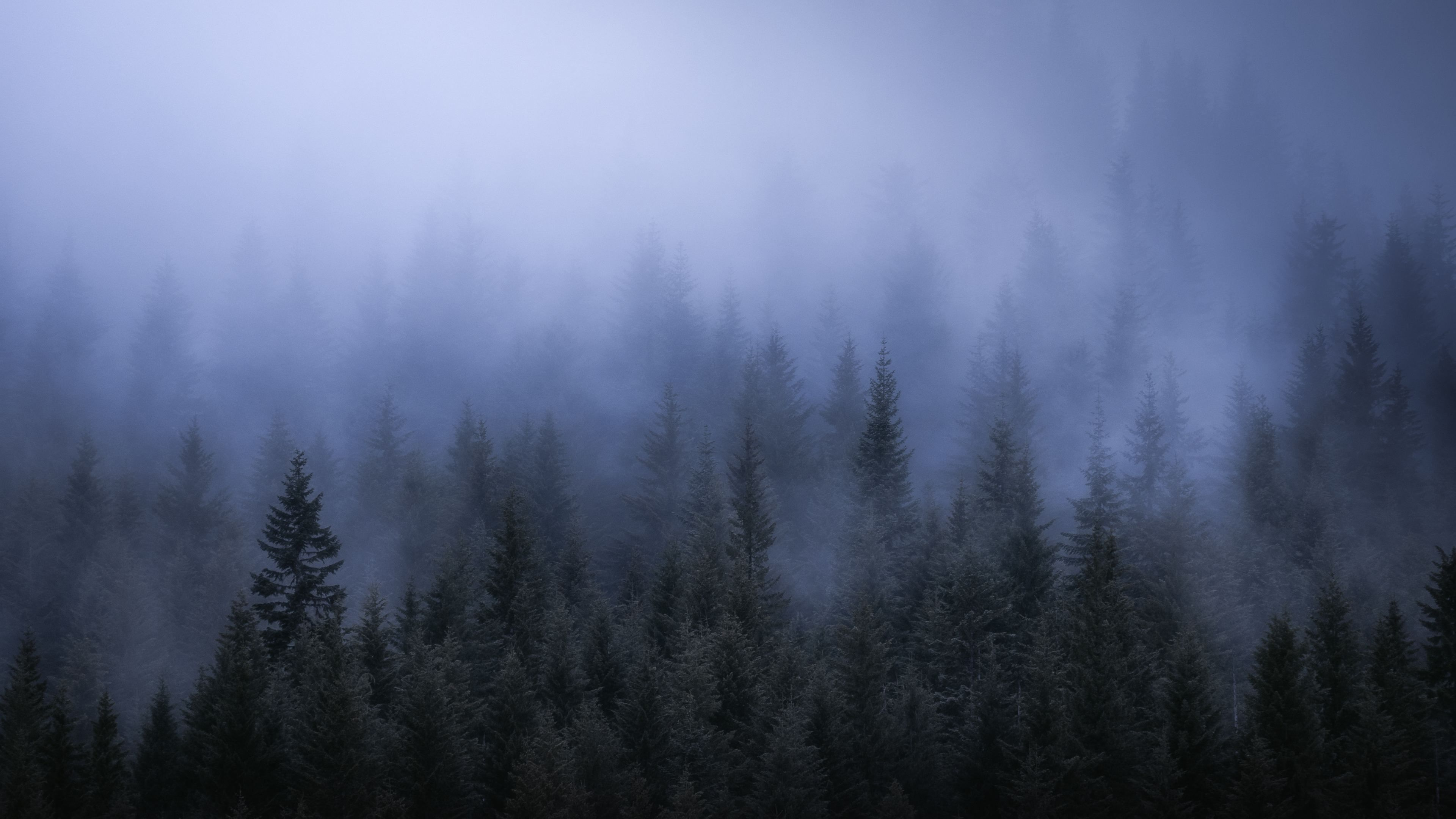Fog Dark Forest Tress Landscape 5k Trees Wallpapers Nature Wallpapers Landscape Wallpapers Hd Wallpapers F Forest Wallpaper Landscape Wallpaper Dark Forest