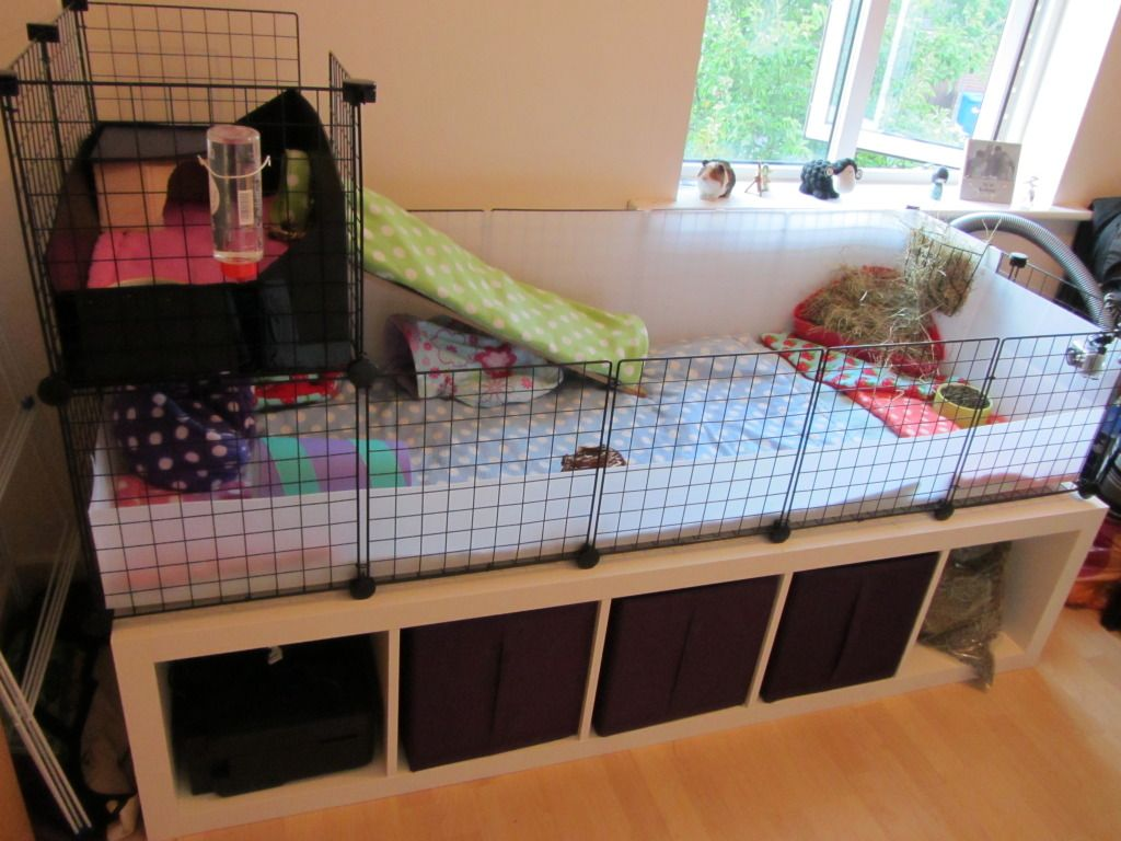 guinea pig cage ikea google search piggie love