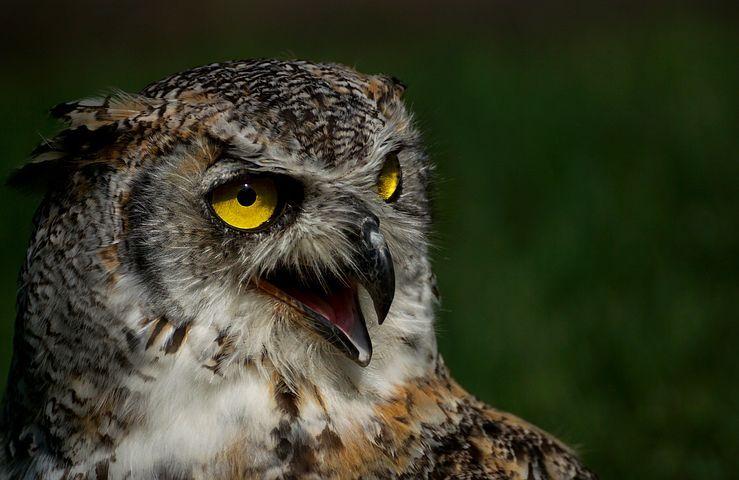 fotky zdarma z velkého ptáka