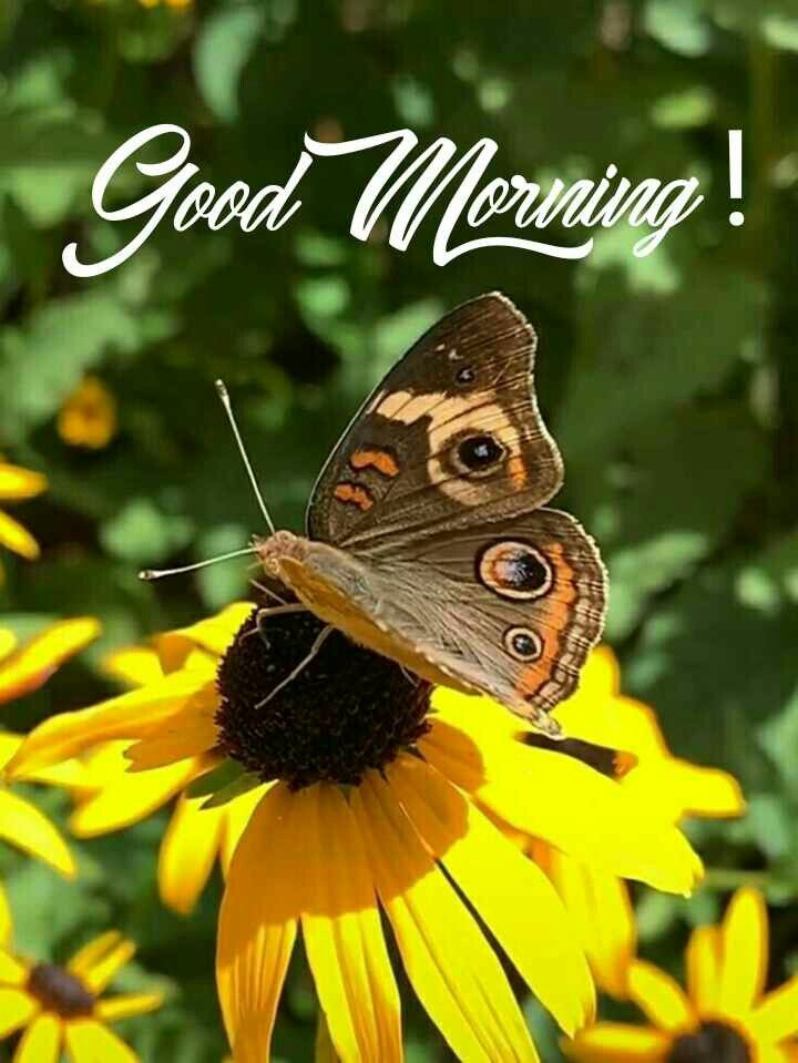 Good Morning Images Beautiful Butterflies Butterfly Pictures Beautiful Flowers Wallpapers