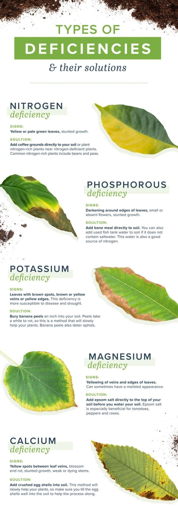 Homemade Plant Food And Plant Deficiencies Plant Deficiencies Homemade Plant Food Plants