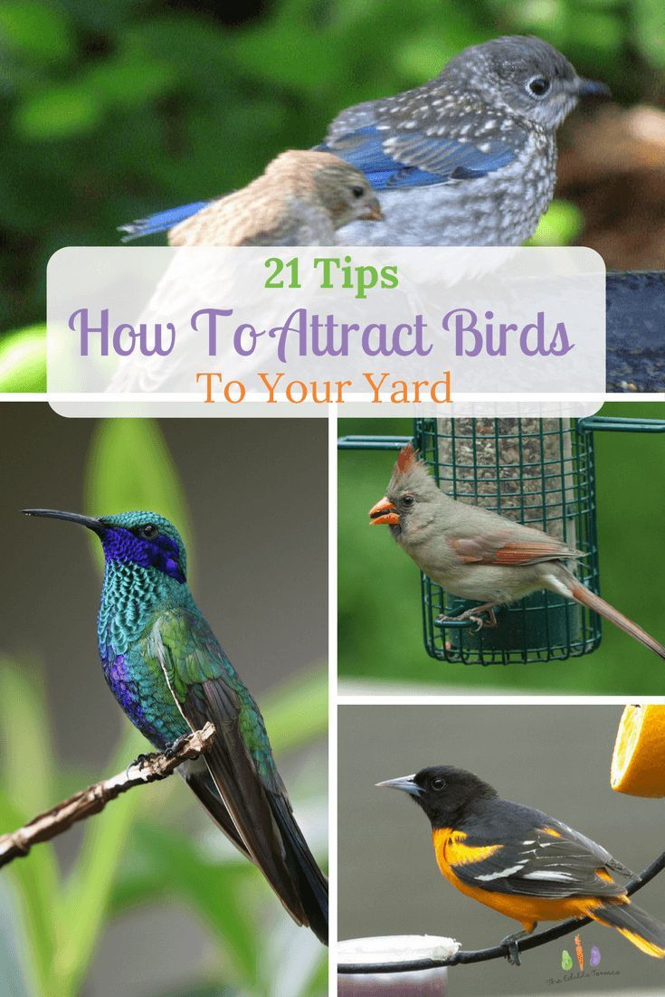 21 Quick Tips For Attracting Birds to Your Yard or Garden ... on Birds Backyard Landscapes id=45939