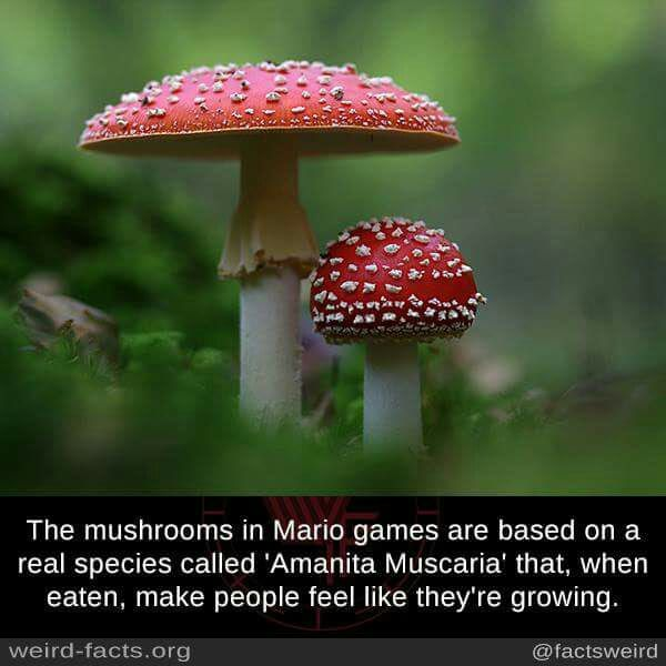 mario mushroom name in real life