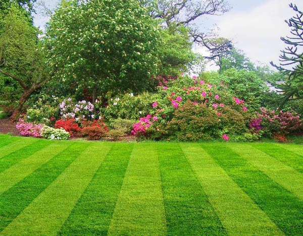 Tips to help you get your lawn healthy and green Articles I like