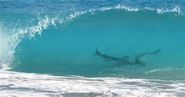 Thousands Of Swarming Sharks Empty Florida Beaches
