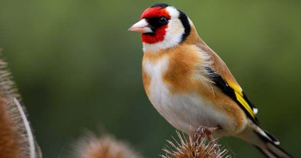 pájaros domésticos introducción y cuidados  fotos