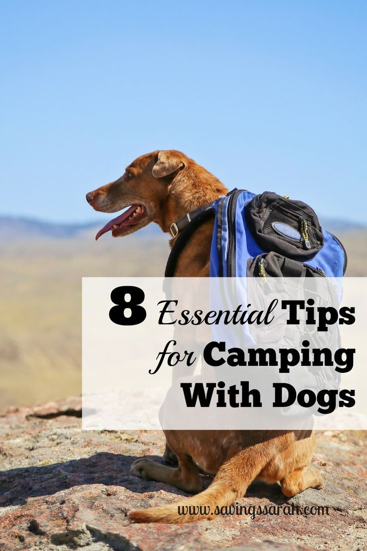 8 Essential Tips For Camping With Dogs Camping Rv And Rv Accessories