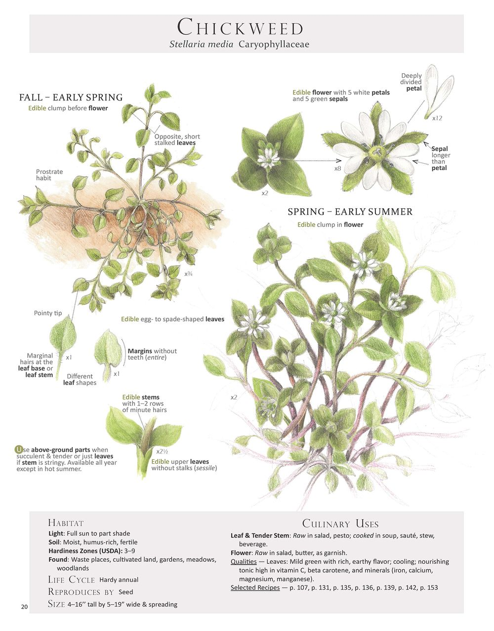 What are the best guides to edible plants?   Outside Online