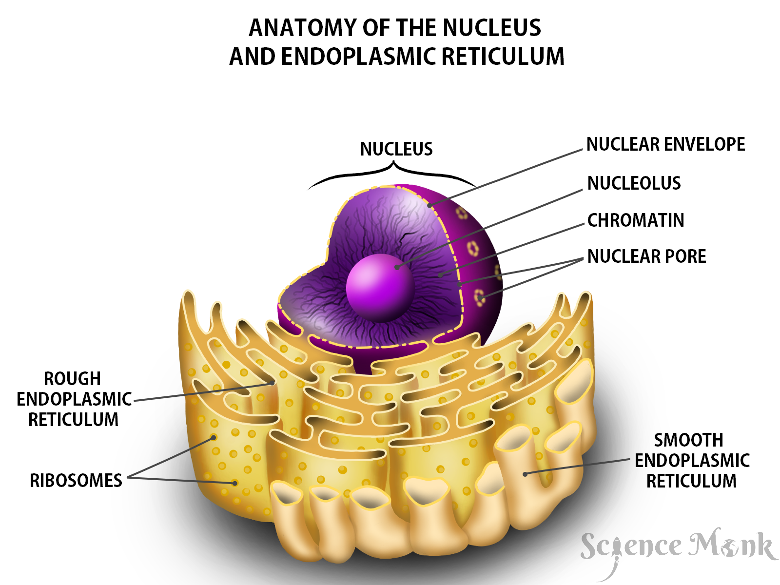 Everything You Need to Know About Cell and Its Parts