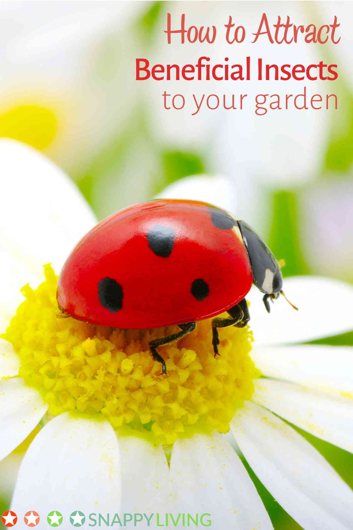 Charming How Do You Keep Bugs Out Of Your Garden Without Using Pesticides? One Tried  And