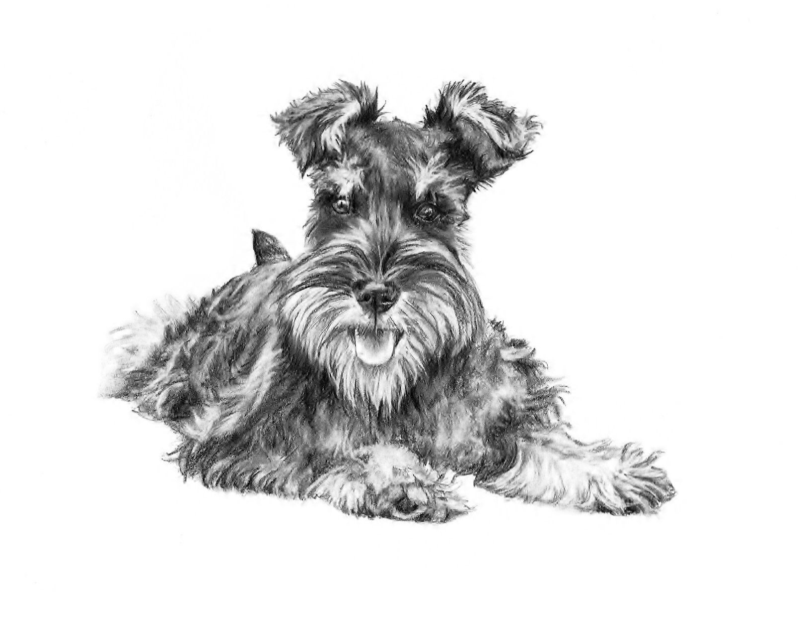"""Schnauzer Decal Bumper Sticker Gifts Dogs Pets Animals Portraits 5/"""" Outdoor"""