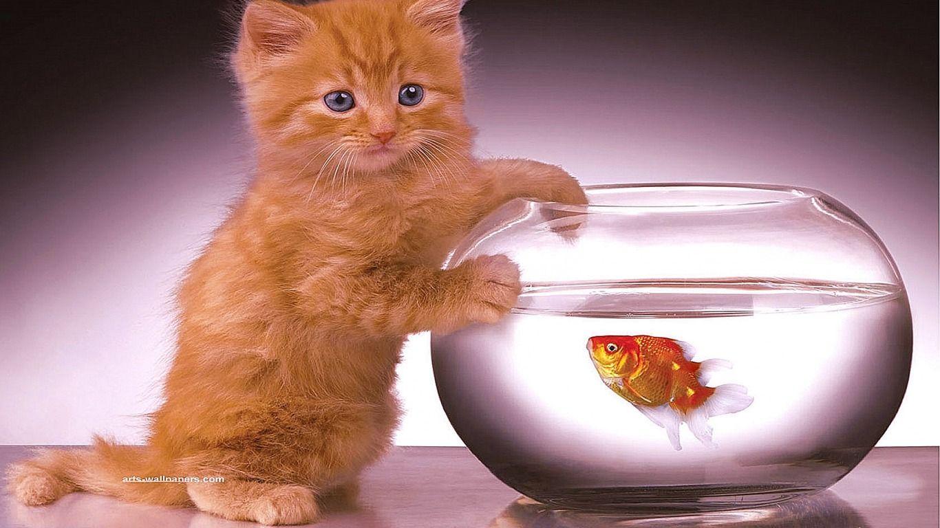 De olho no peixinho!!!