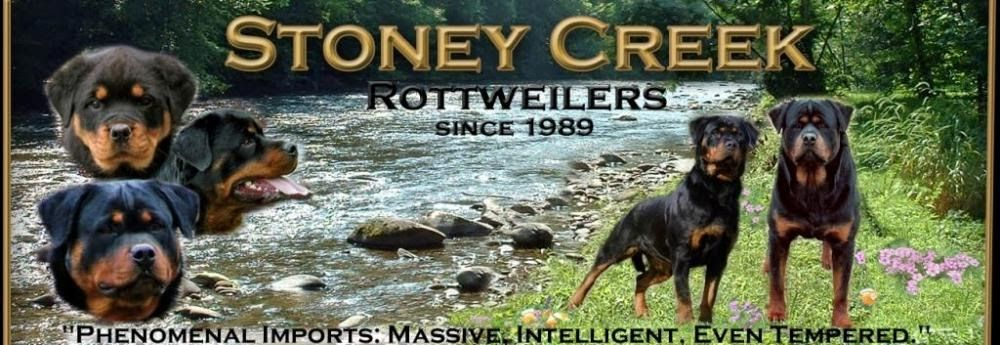 Rottweiler Puppies For Sale In Ga Puppies for sale