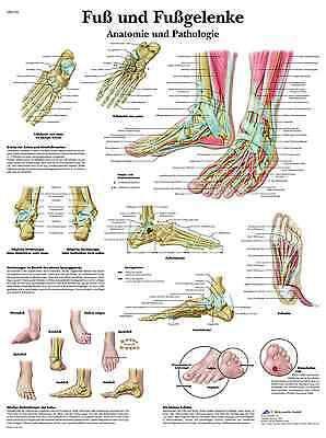 Photo of VEGETATIVE NERVOUS SYSTEM LEAFLET (laminated!) Anatomy 50 x 67cm Poster – EU …